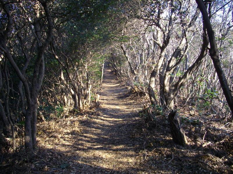 照葉樹林帯の道