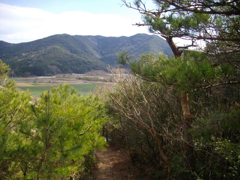 松と下山路