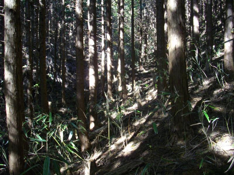 矢作川源流の一部