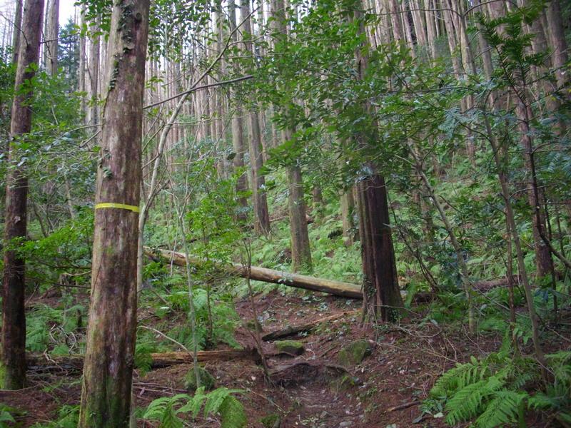 植林帯の道?