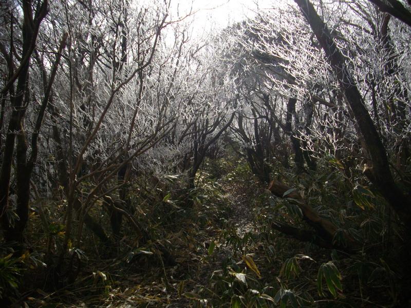 樹氷トンネル