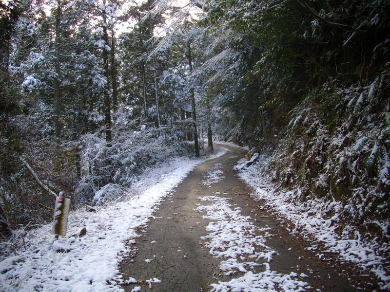 多良岳林道