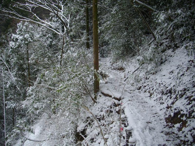 多良岳登山道