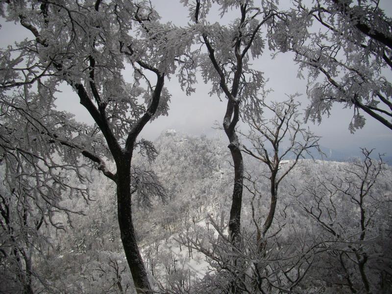 樹氷の間に山頂の社が