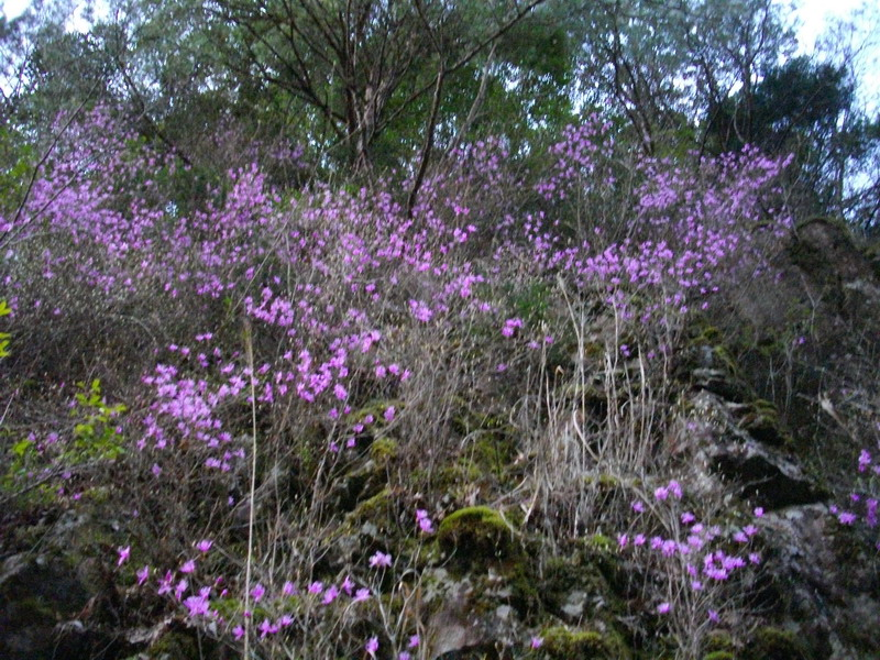 林道にあった桜のような花