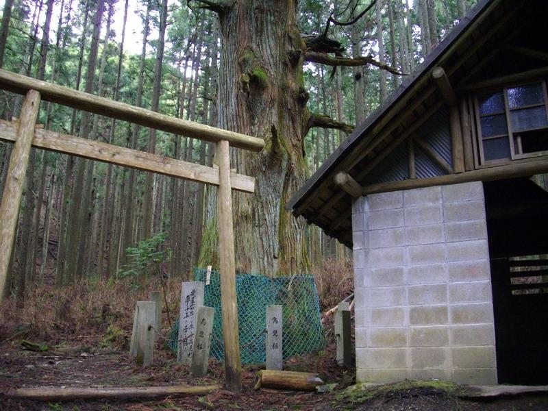 高見杉と避難小屋