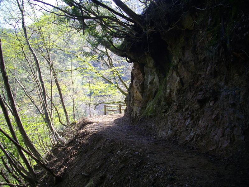 遊歩道のような登山道