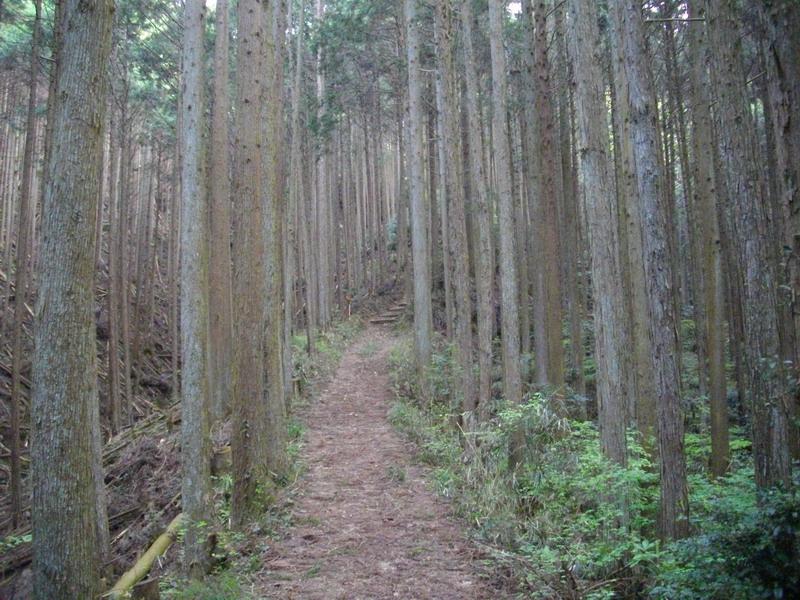 竜門登山道
