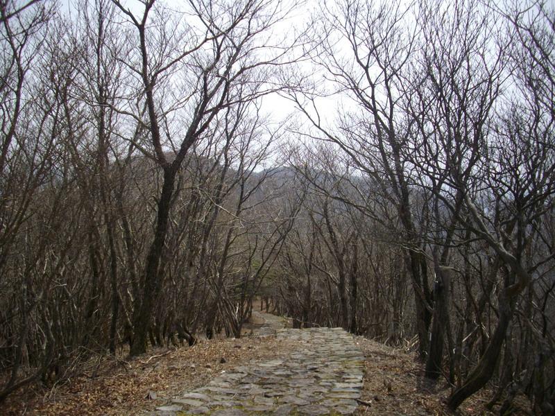 護摩壇山への道
