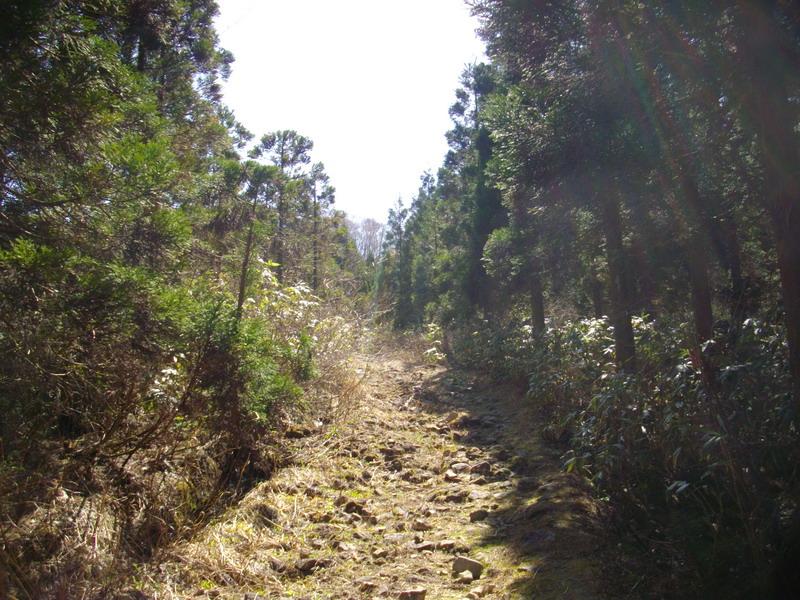 廃林道を行く