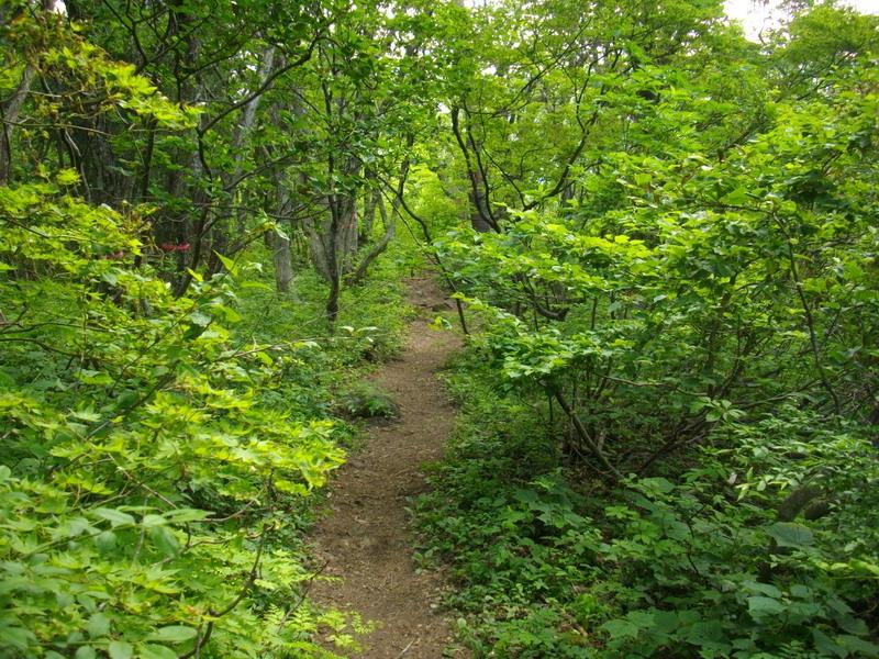 林道を目指す