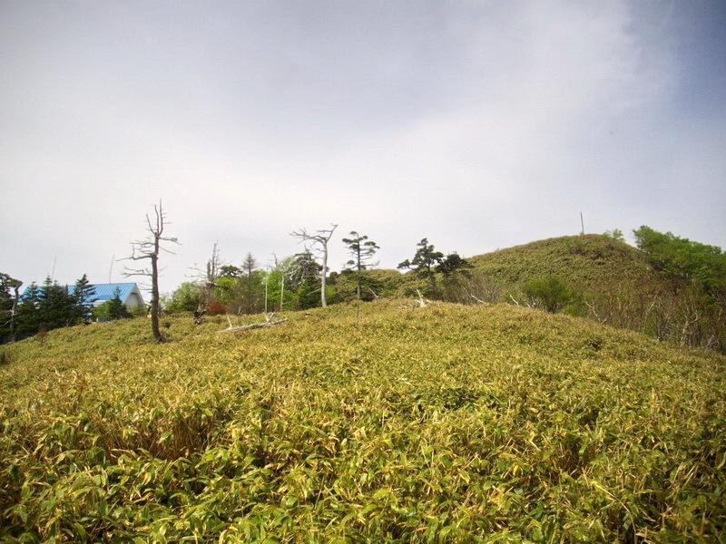 IMGP5440.jpg
